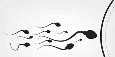 Penelitian Terbaru Ungkap, Virus Corona Ditemukan Di Cairan Sperma