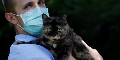 Kabar Baik Untuk Pecinta Hewan, Seekor Kucing Di Perancis Sembuh Dari Virus Corona