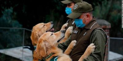 Chile Latih Anjing Polisi Untuk Kenali 'Bau' Virus Corona