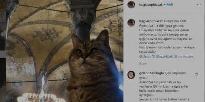 \'Penjaga Setia\' Masjid Aya Sofya Meninggal Dunia, Gubernur Istanbul Ungkap Kesedihan