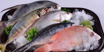 Mengenal Ikan Nusantara yang Kaya Akan Gizi